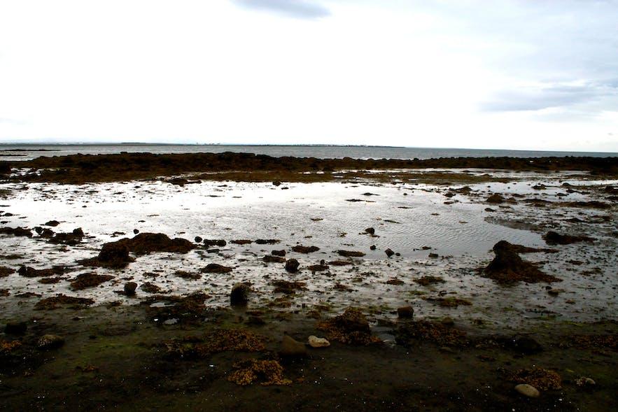 seaside in reykjavik