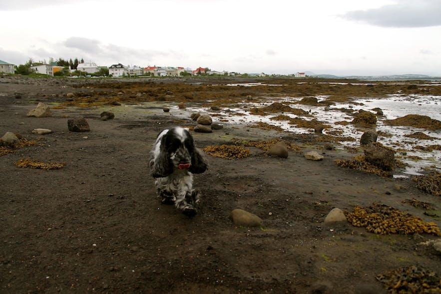 ægissíða, seaside in reykjavik