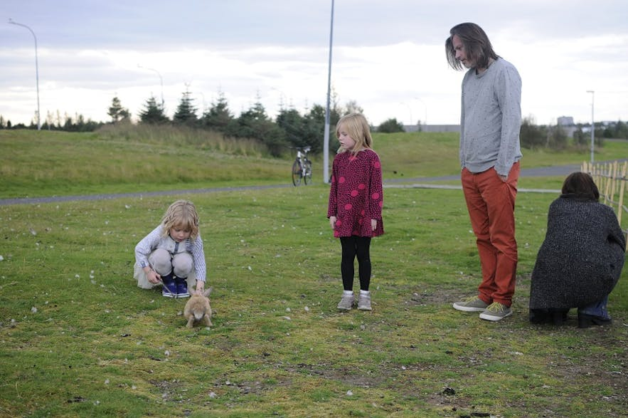 Rabbits in Iceland