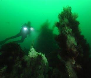 Diving Geothermal Chimneys | Dive Tour from Akureyri