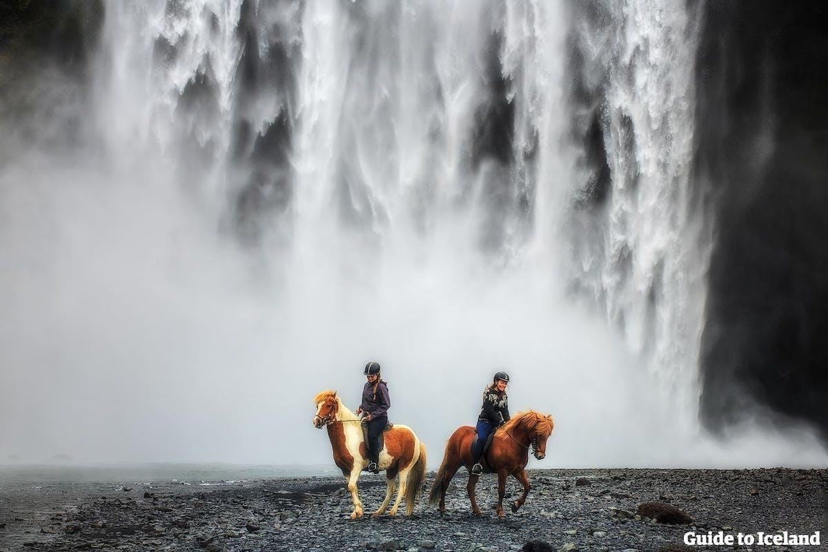 Reykjavik Excursions hero image