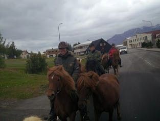 East Iceland Horse Riding Adventure
