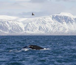 กิจกรรมบนทะเล ฤดูหนาว | ล่องเรือ ดูวาฬ และพัฟฟิน