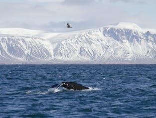 冬期のイルカとホエールウォッチングツアー