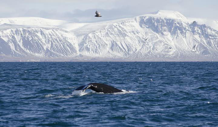 겨울 바다 모험 고래와 돌고래 관측 투어