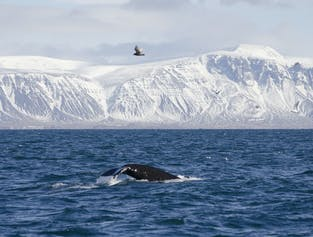 겨울 고래 관측 투어