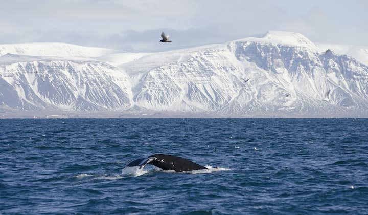 Zimowy rejs  Wieloryby i delfiny