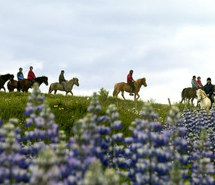 Two-Hour Horseback Riding from Laxnes Farm
