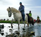 The Icelandic horse wading a stream.