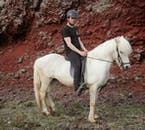 Le cheval islandais est très sympathique et facile à monter