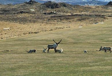 Renifery na Fiordach Wschodnich   Wycieczka Super Jeepem