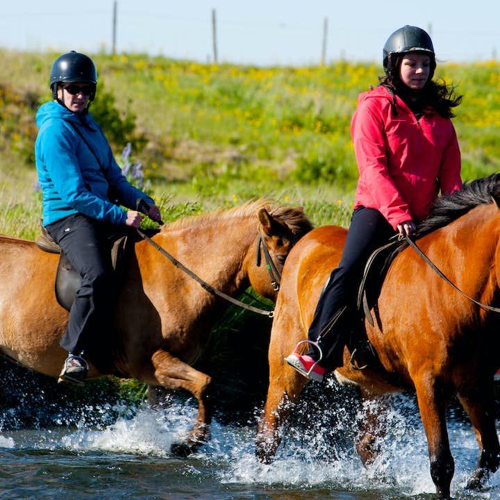 2小时骑马旅行团|冰岛传统特色体验,雷克雅未克出发