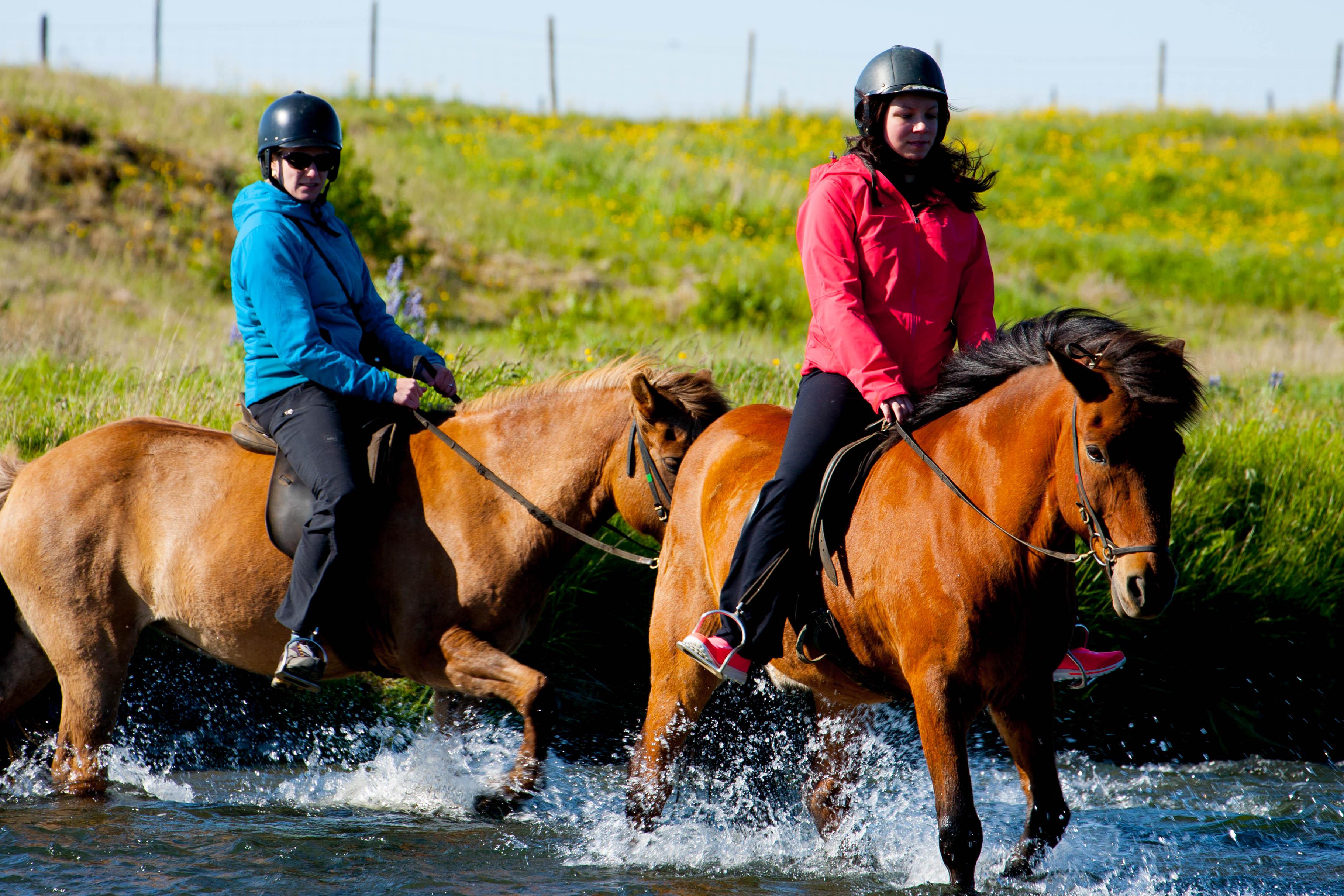 スーパージープがなくても、アイスランドの馬に頼り川を渡ることができる