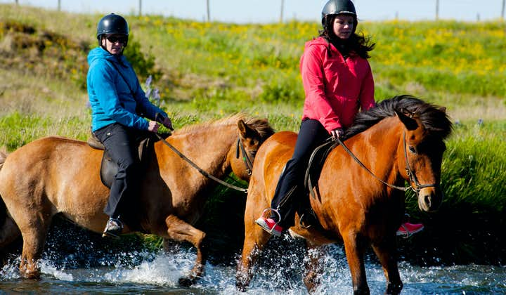 Icelandic horses have been used to ford rivers for centuries.