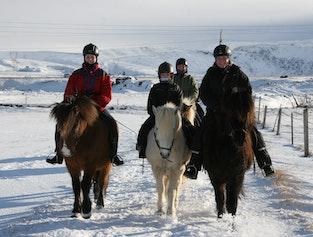 2 Hours Horse Riding & Lunch - Elfin Tour
