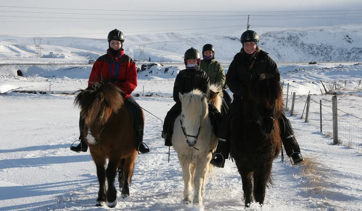 Rain, snow or hail, nothing can stop the Icelandic horse.