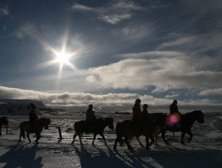 2 Hours Horse Riding & Lunch - Icelandic Diversity