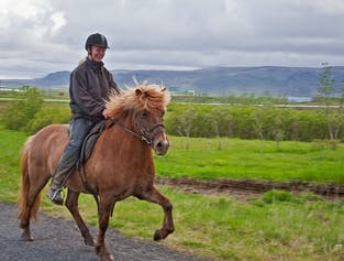 3 Hours Horse Riding   Meadows & Mountains