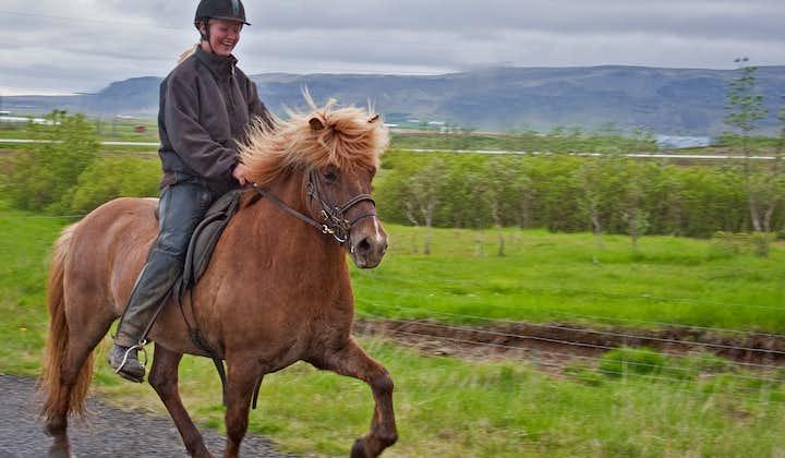 Horseback ride up to the mountain Ingólfsfjall.