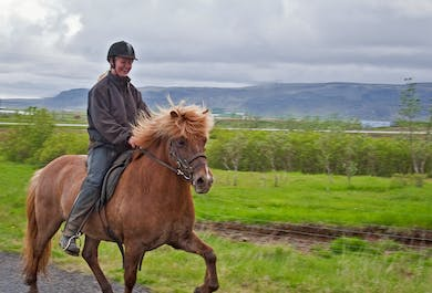 3 Hours Horse Riding | Meadows & Mountains
