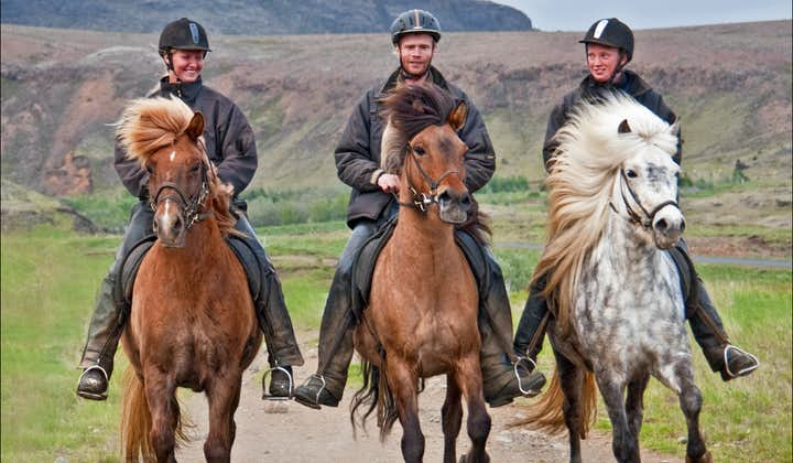 You can try the unique 'tölt' gait of the Icelandic horse on this 3-Hour Horse Riding Tour for Experienced Riders.