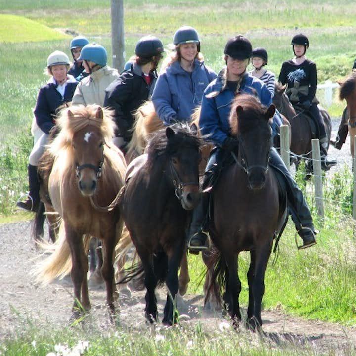 骑马观鲸组合日发团 雷克雅未克出发