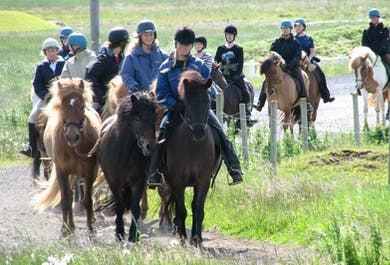 骑马观鲸组合日发团|雷克雅未克出发