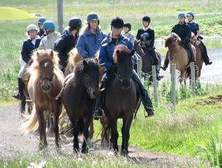 Horse Riding & Whale Watching Daytour