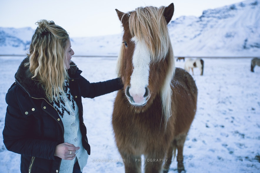 Icelandic horses - our friends