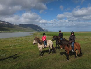 Family Friendly Horseback Riding in North Iceland