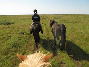 Horse Riding Below the Mountains | Day Tour