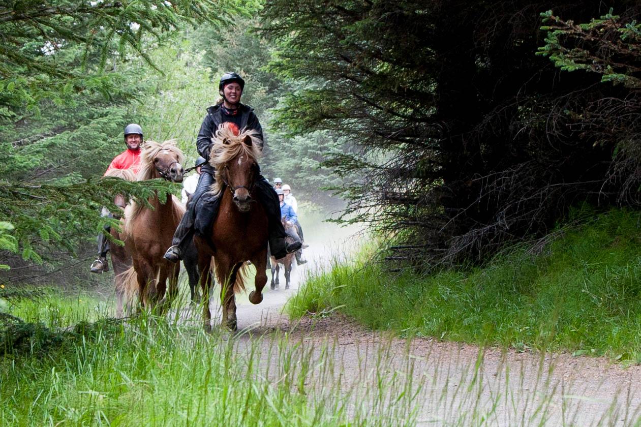 在冰岛马背上,欣赏冰岛自然风光。