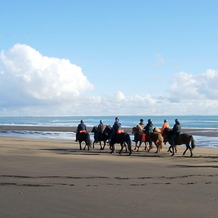 冰岛海滩骑马一日游