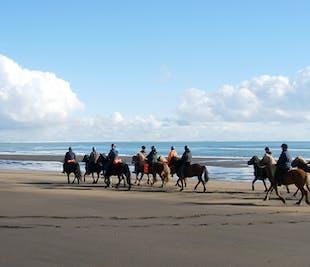 Balade à cheval à la journée au bord de l'océan | Sud de l'Islande