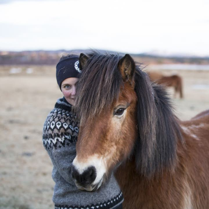 The Icelandic horse is a friendly and gentle creature.