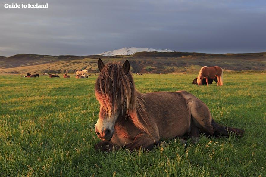 아이슬란드의 여름 날씨