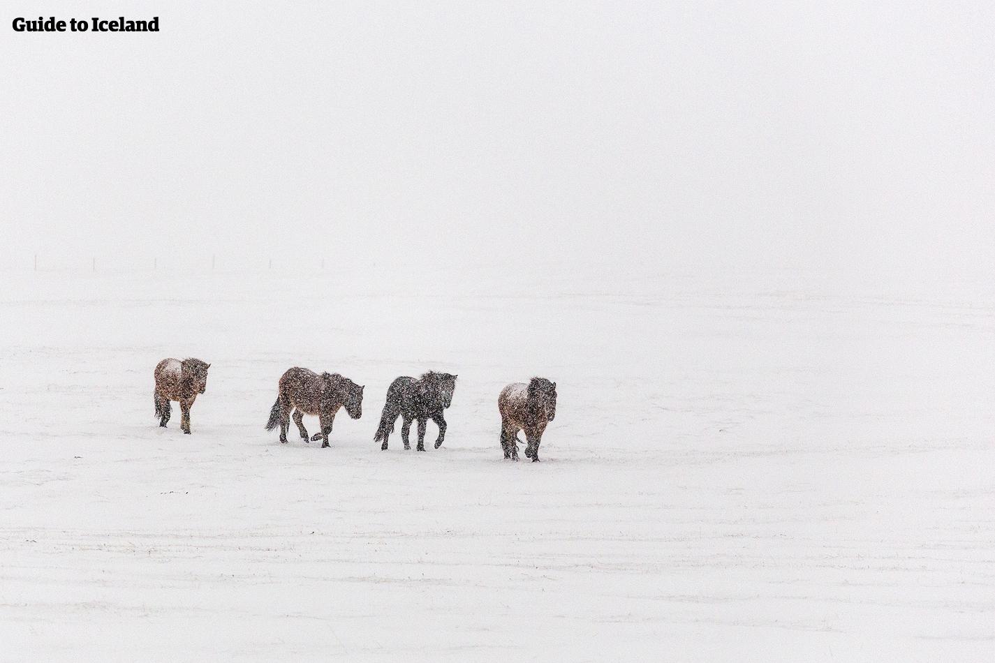 Island i desember | En uslåelig guide