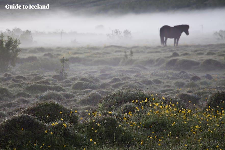 Paisaje nublado en Islandia