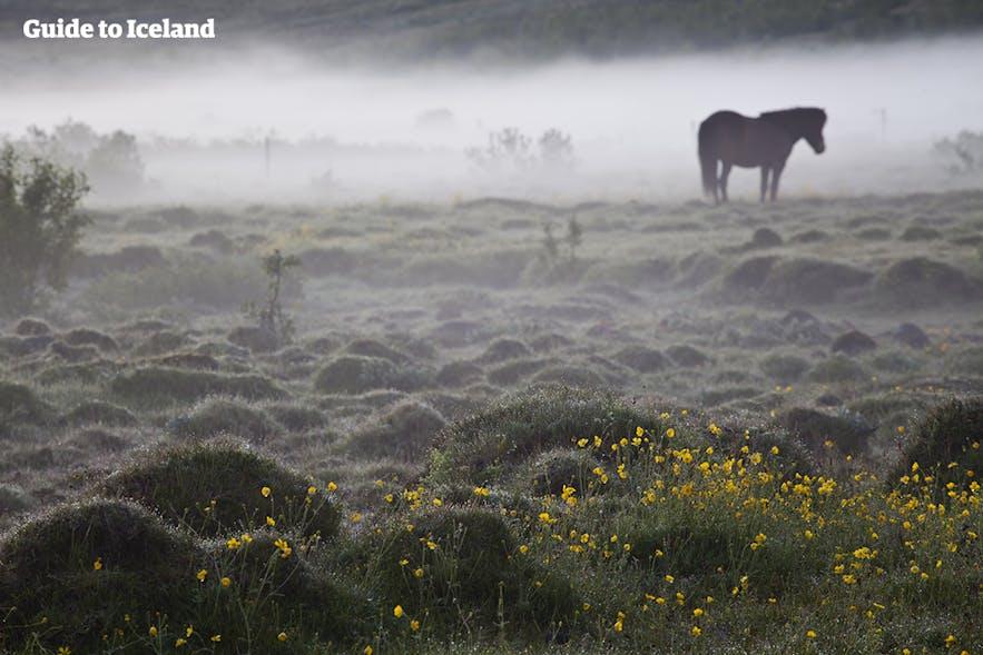 Dimmigt landskap på Island