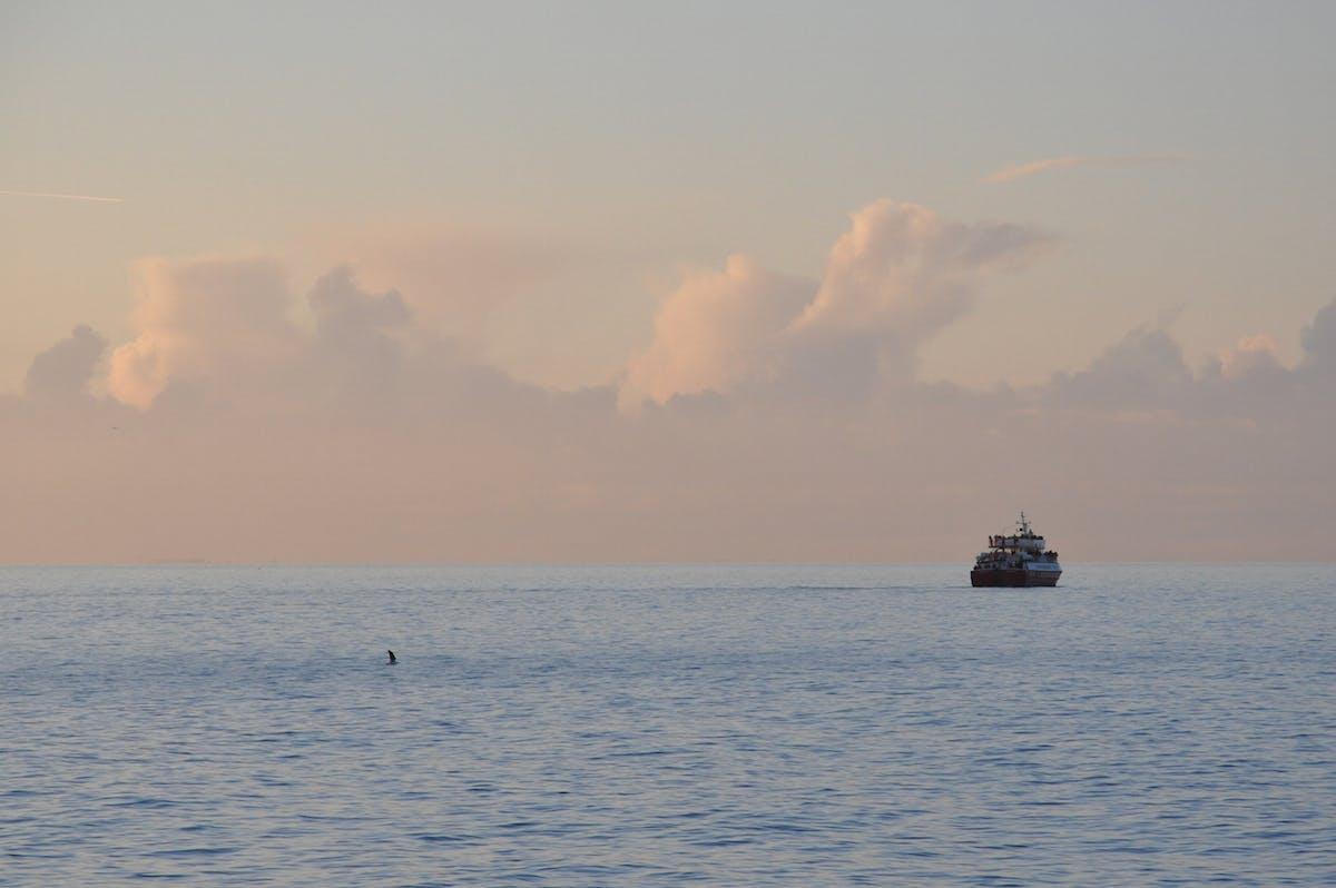 冰岛观鲸团