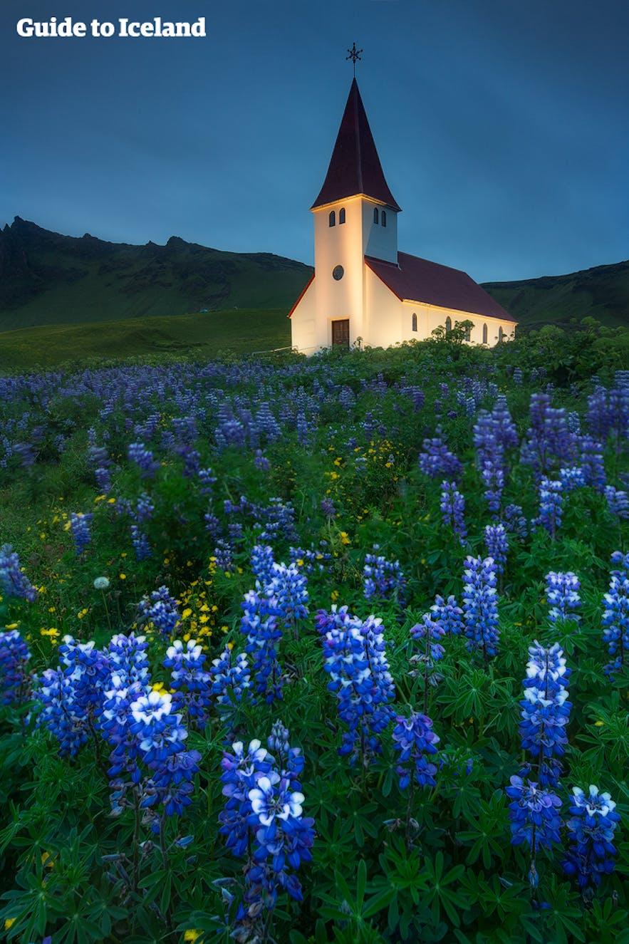 冰岛夏天维克镇教堂鲁冰花