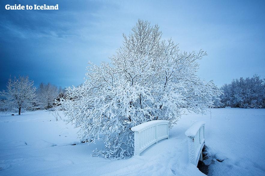 Lys dag med snefald i Reykjavíks botaniske have