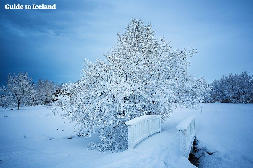 Heller und verschneiter Tag im Botanischen Garten von Reykjavik.