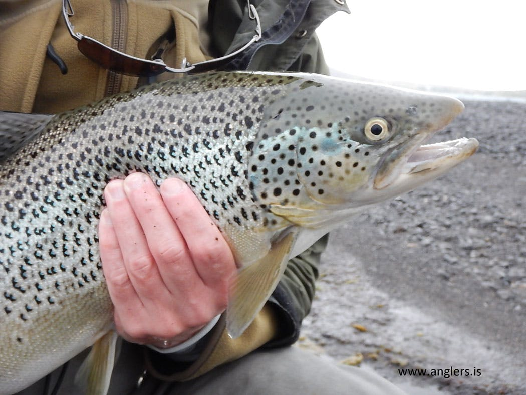 The Golden Circle Value Tour   Fishing & Sightseeing