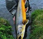 Découverte du Cercle d'Or et séance de pêche