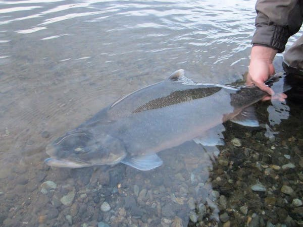 Anglers - Fishing and travelling in Iceland