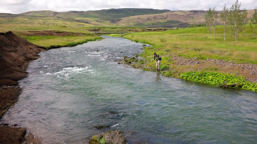 Trout fishing in Iceland!