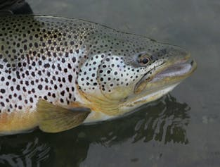 Sea Trout, Char and Salmon | River Fishing Day Tour