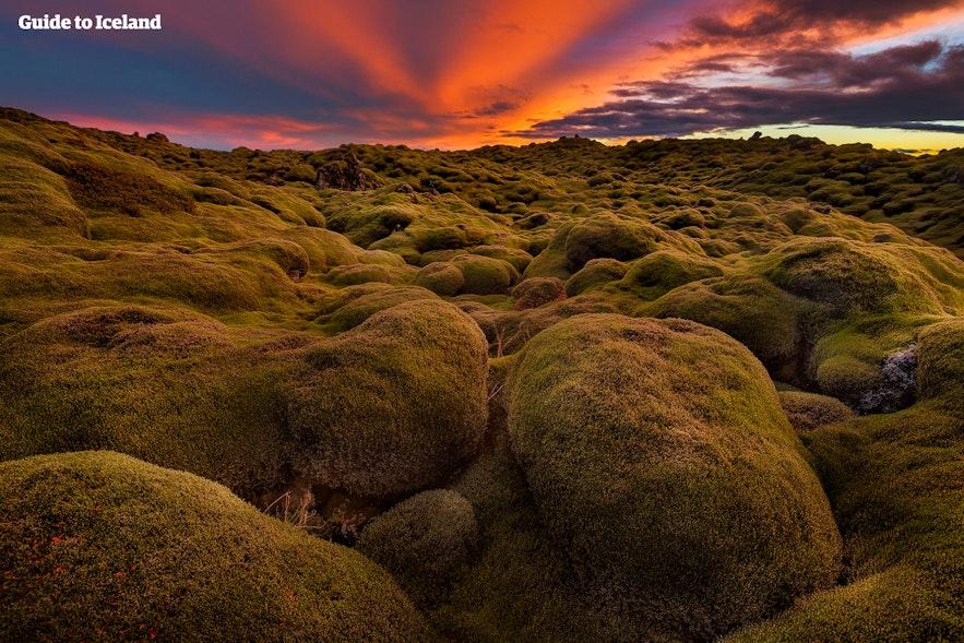 아이슬란드 용암대지를 가득채운 이끼