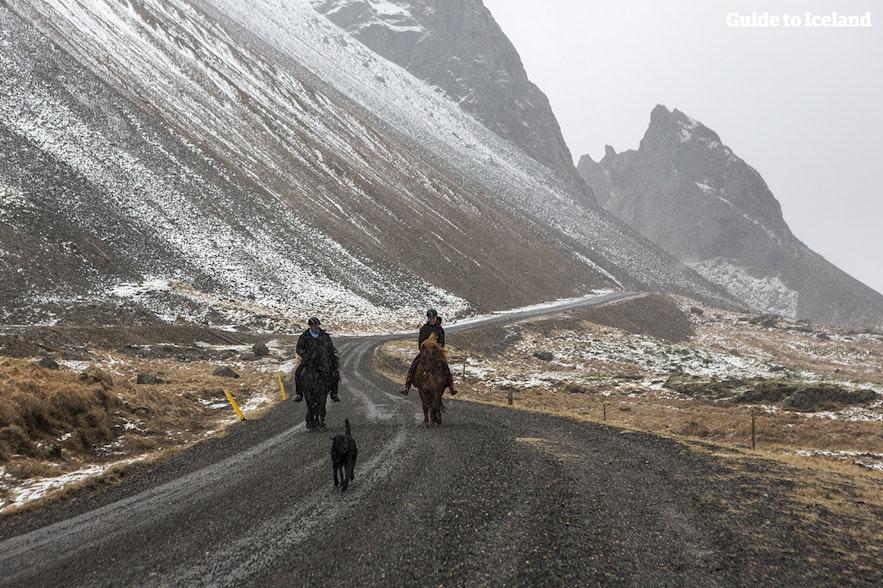 Ryttere på vej ned ad en bjergvej om vinteren i Island.